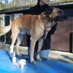 """""""Erste-Hilfe am Hund"""" in Lemgo-Matorf"""