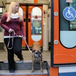 Praxistraining für Hund und Halter