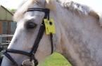 Pferd-mit-Reitplakette