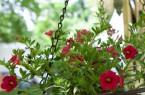 Blumenampel_1