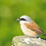 Stadtpark Gütersloh – Lebensraum für seltene Tiere und Pflanzen