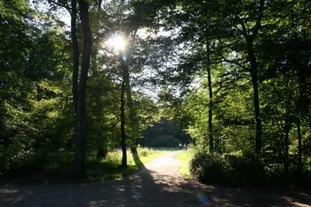 Stadtpark-Weg-in-sonne-2011