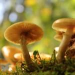 """Zweck- Ehe mit einem Pilz – """"Nature Communications"""""""