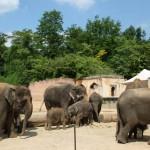 Eine Reise um die Welt: Der Erlebnis-Zoo Hannover