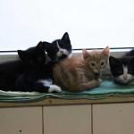 Erneuter Aufnahmestopp für Katzen im Bielefelder Tierheim
