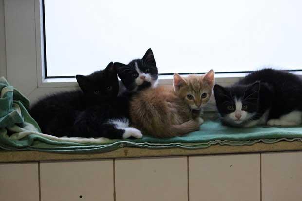 katzen aus dem tierheim