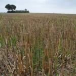 Gemeinsam für den Artenschutz – Landwirte aus Salzkotten erhalten Prämien für Feldvogelschutz