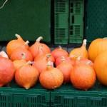 Kürbis-Sonntag mit Bauernmarkt am 26. Oktober