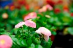 Gartenmesse-Bad-Salzuflen