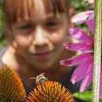 Wildbienen helfen im LWL-Freilichtmuseum Detmold