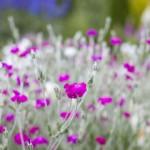 Wettbewerb der schönsten Fotos vom Tag der Gärten