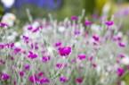 BlumenTagGärten