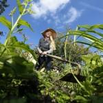 Zecken-Gefahr im Garten