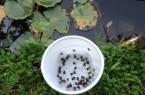 Foto Erdkröten