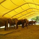 Circus Krone: PETA übt Kritik an der Stadtverwaltung wegen Gastspielgenehmigung