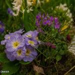 Messe Bad Salzuflen: Garten – Frühling – Lebensart