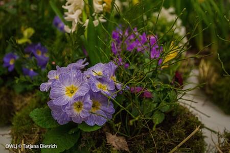 Garten,Frühling Messe BS, 25.02.16-0128