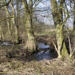 Was sind Gewässerstrukturen? Erläuterungen im Bild und am Bach