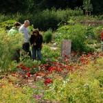 Hereinspaziert ins Gartenglück