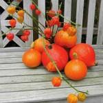 Saison der offenen Gärten in Lippe  beendet