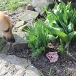 Hündin im Garten vergiftet – PETA bietet 500 Euro Belohnung für Hinweise