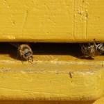 Mehr Wissen über Bienen und Imkerei