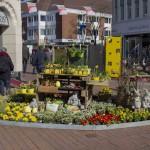 Frühlingserwachen in der Gütersloher Innenstadt