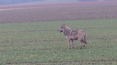 Wolf_Marco__Brentfuehrer