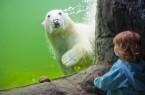 Ungezäh mte Natur, faszinierende Tiere, spannende Mutproben. Gehen Sie auf Entdeckungsreise durch Afrika oder Alaska und dem Abenteuer Wildnis. In einem Unterwassertunnel durchqueren Sie die größte Seelöwenanlage Europas. Goldmine, Rangerstation und Trapperhütte bieten echtes Wildlife-Abenteuer.