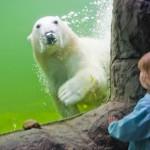 Ruhr.TopCard:Neuer Verkaufsrekord für erfolgreichste Freizeitkarte