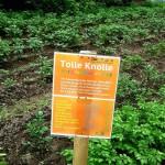 Bunt wie das Leben: Tausendschön startet in die 3. Gartensaison