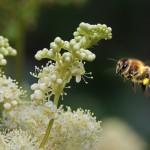 Rund um die Biene