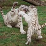 Neue Saisonkarte 2018 für den Zoo Safaripark ist bereits in diesem Jahr gültig