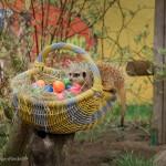 Flieg, Hase, flieg… Ostern wird's bunt im Safaripark