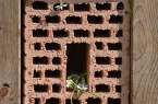 Wildbienenwand negativ