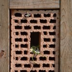 BUND Lemgo: Erhalt von Wildbienenarten erfordert Erhalt von Lebensräumen