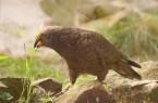 Bilbo - Vogelpark Heiligenkirchen
