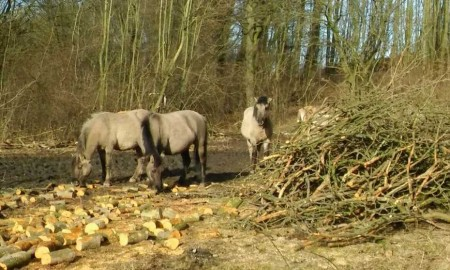 Wildpferde am Kleieberg