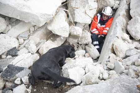 """""""Trümmersuche"""": Anspruchsvolle Trainingsflächen – ob auf Trümmern oder im Wald wurden die Hunde vor Herausforderungen gestellt © A.Jaeckle"""