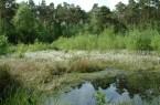 : Das Naturschutzgebiet Hühnermoor hat eine einzigartige Flora und Fauna zu bieten (Foto: Stadt Harsewinkel).