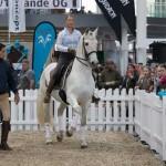 HORSICA: Volles Programm für Pferdefreunde!