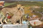 banner-safaripark