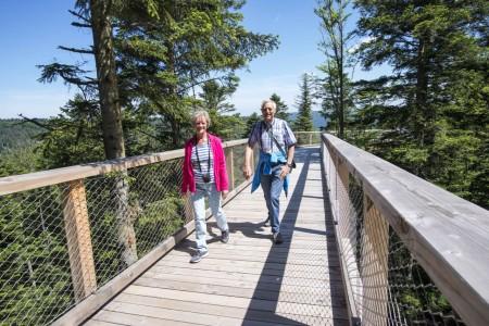 Der Baumwipfelpfad ist die Besucherattraktion auf dem Sommerberg.