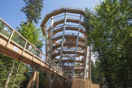 Der 40 Meter hohe Turm bietet einen grandiosen Rundblick über Wipfel und Tannen.