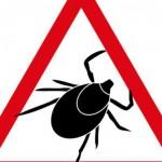 Auch im Herbst: Risiko durch Zeckenstiche
