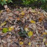 BUND-Lemgo Tipp zum Herbstlaub