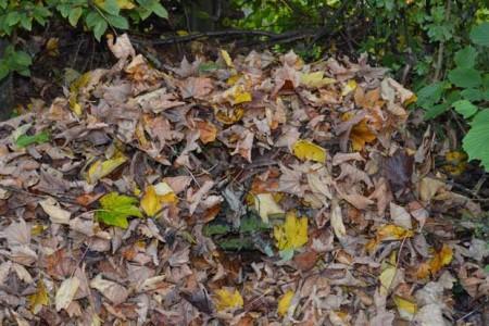 Herbstlaub-081-Presse