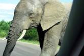 Ein Foto von der Begegnung mit einem Elefanten aus nächster Nähe (Bildnachweis: Robert Kauffeld).