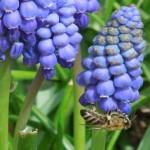 01.02. – Tipps für den heimischen Garten