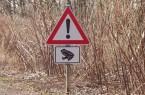 Die Amphibienwanderung in Minden: Autofahrer müssen aufpassen. Foto: © Stadt Minden